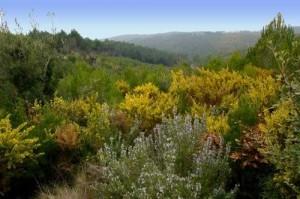 L'equip de govern CiU-PSC-PP pretenen poder posar hotels, restaurants i equipaments de turisme rural a la Serra de Galliners.
